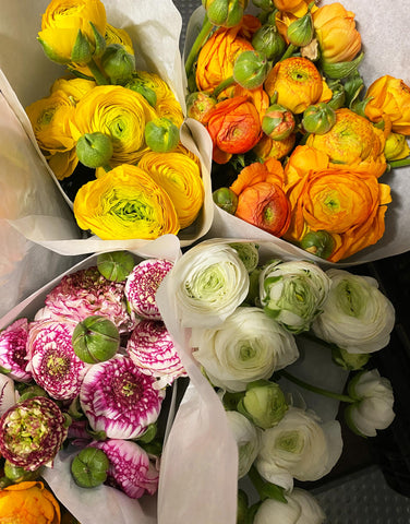 Ranunculus Bunches of 10 stems