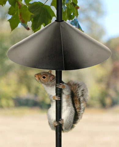 squirrel proof bird feeder baffle