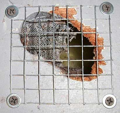 squirrel steel mesh to cover access holes