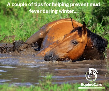 Mud Fever Treatments and Remedies