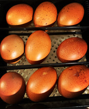 Load image into Gallery viewer, Black Copper Marans | Fertile Hatching Eggs