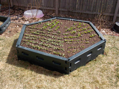 Instagarden double hexagon raised bed garden kit