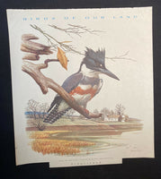 "Vintage ""Birds Of Our Land"" 9 Dismantled Calendar Prints By Roger Torey Peterson"