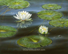Load image into Gallery viewer, Water Lilies