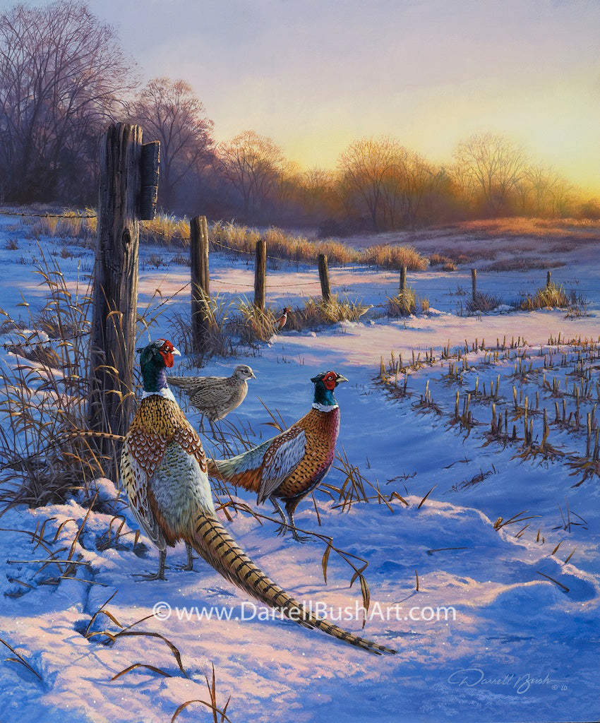 Fence Line Pheasants