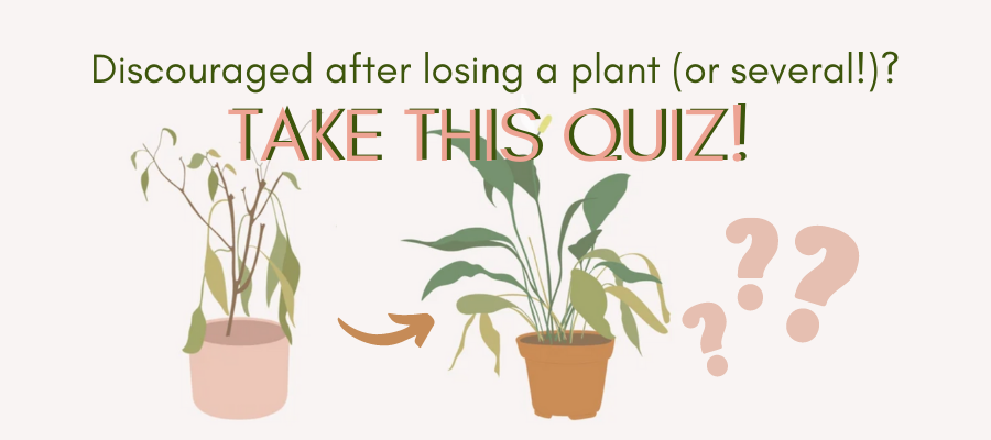 """Discouraged after loosing plants? Find out if there's hope for your """"plant killer"""" ways!"""