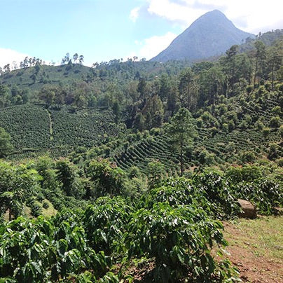 Single Origin | Honduras Reserva