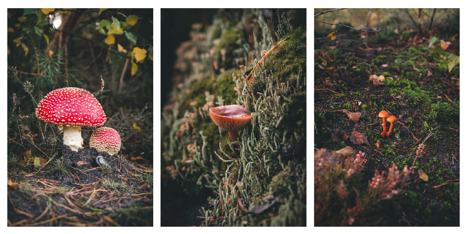 Mushrooms by Rob Turpin