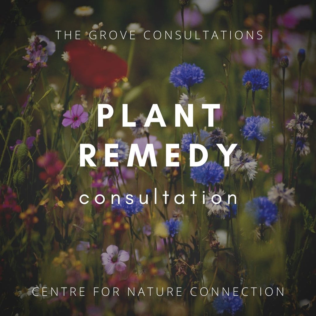 Consultation - Plant Essence Remedy