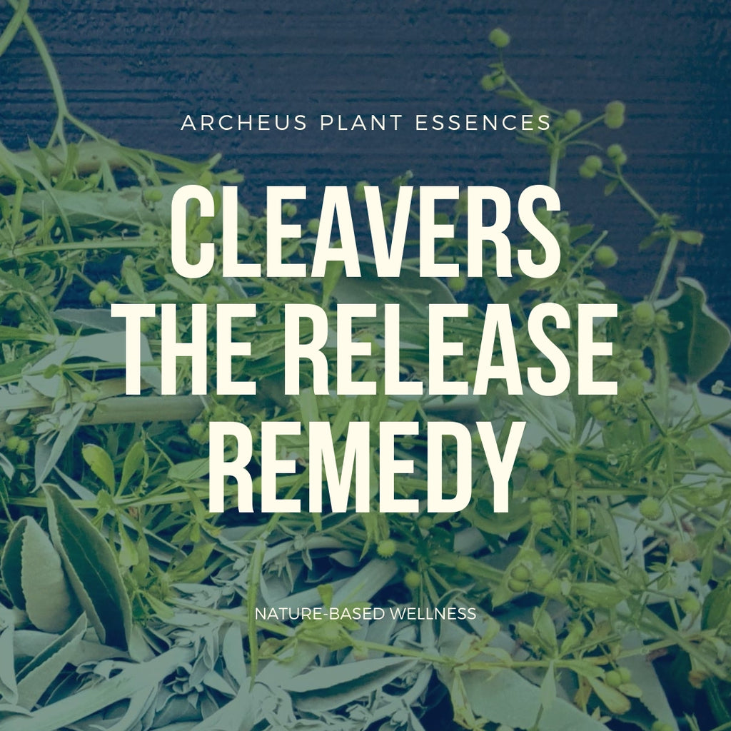 Cleavers plant essence