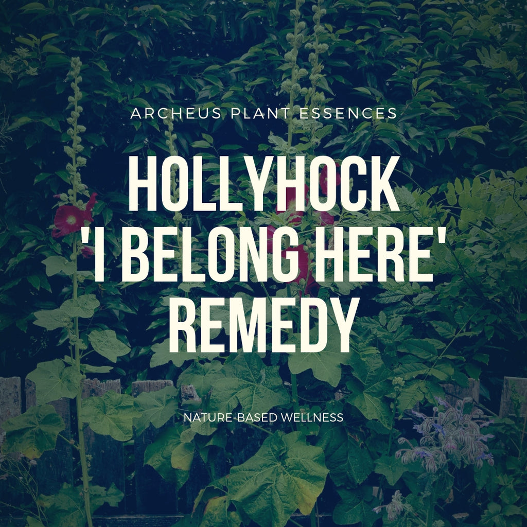 Hollyhock plant essence