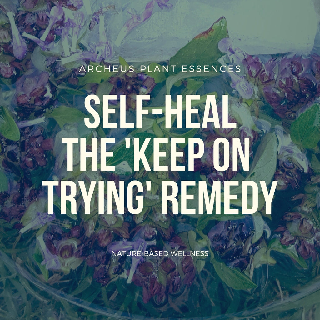Self Heal plant essence
