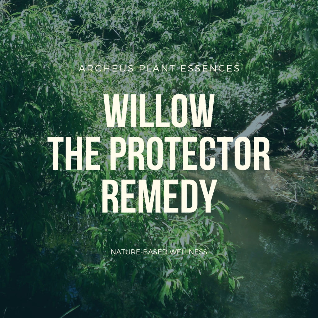Willow plant essence