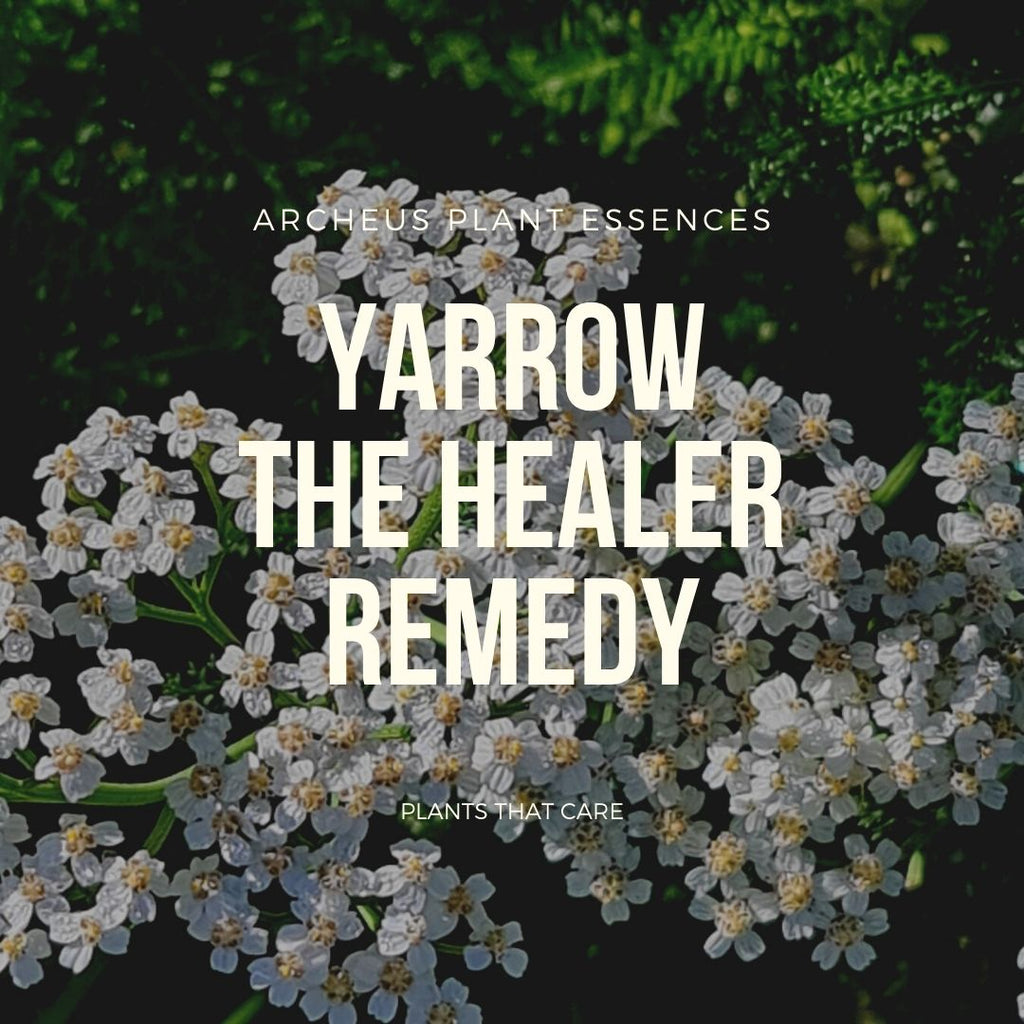 Yarrow plant essence
