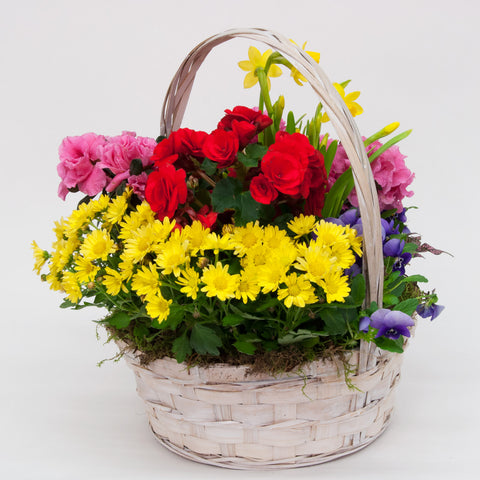 Spring in a Basket