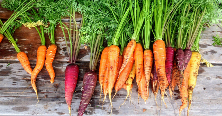 How to grow carrots in your backyard