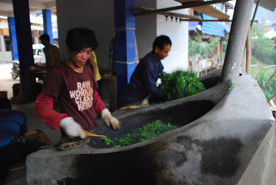 Myanmar workers frying Lao Man E spring leaves in the evening
