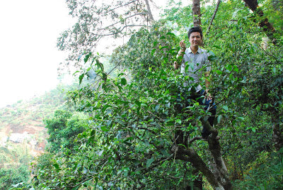 Yours truly, doing some tree climbing on Nannuo's steep slopes