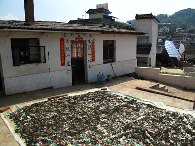 Direct sunlight is the best for drying maocha