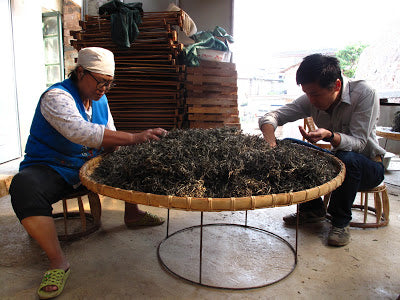 """Picking out the """"huang pian"""" (old yellow leaves)"""