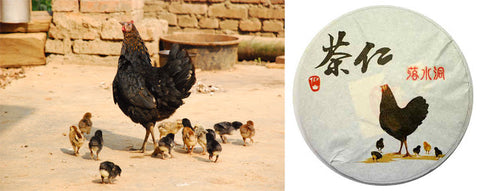 Left: Proud mother of 12 in Lao Ban Zhang. Right: Tea Urchin 2012 Spring Luo Shui Dong wrapper