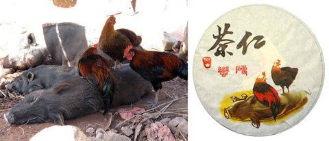 Left: Chickens in Gua Feng Zhai. Right: Tea Urchin 2012 Spring Man Zhuan wrapper