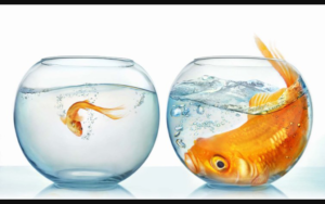 Motivational Moment: Be The Big Fish In A Little Pond.