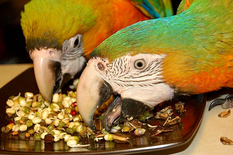 Sprouting for parrots
