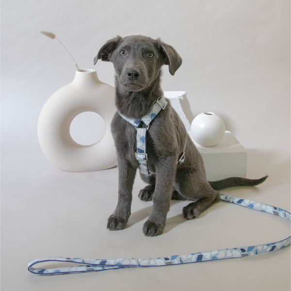 Stylish dog harness CLOUD