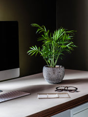 gift a plant with a pot for staff working from home