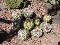 small cacti and succulents
