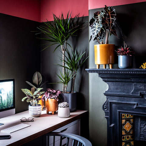 plant collection in home office