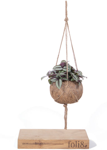 Kokedama style Silver Inch Hanging Plant