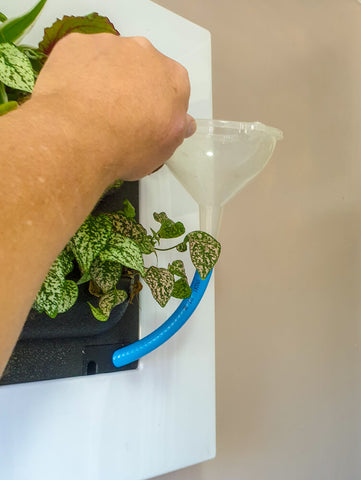 living picture watering system