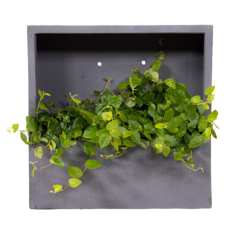 cobble wall art with ficus pumila