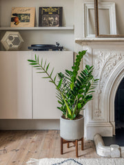 plant gifts with a floor-standing plant pot for large plants