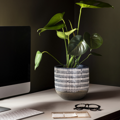 buy houseplants for your home office