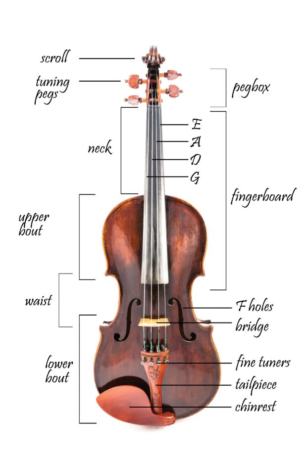 Parts of a violin (including strings, violin pegs, fine tuners, etc.)