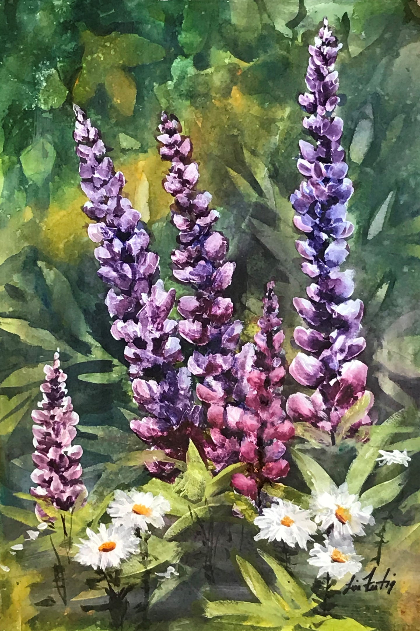 Lupine and Daisy Flowers