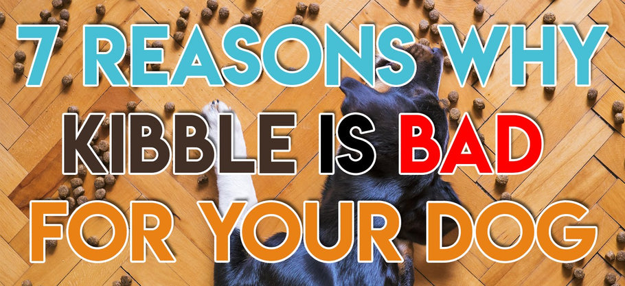 7 Reasons Why Kibble Is Bad For Your Dog