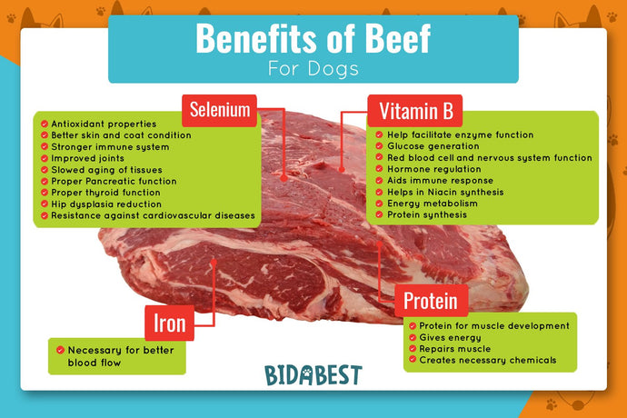 Is Beef Good for Dogs?
