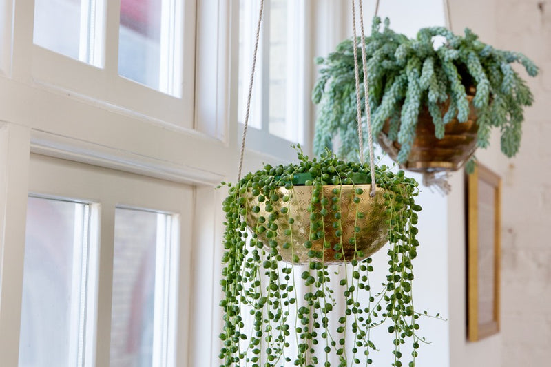 DISPLAYING YOUR HOUSE PLANTS