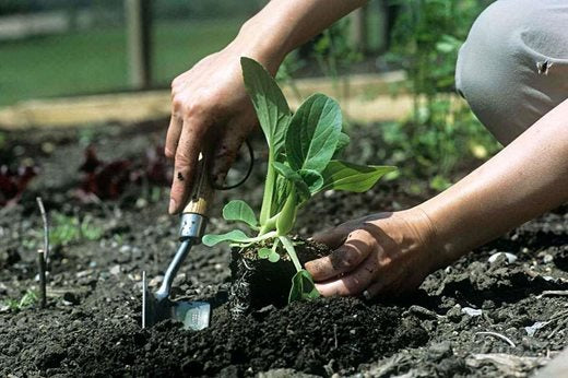 TOP TIPS FOR SOWING VEGTABLES
