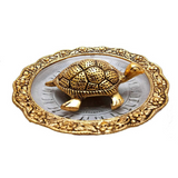 Golden Coated Tortoise for home decoration