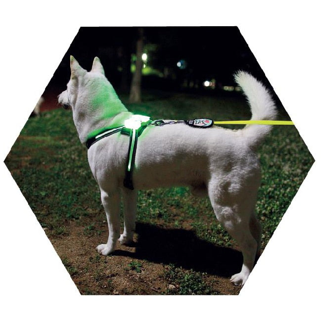 Large LED Dog Harness