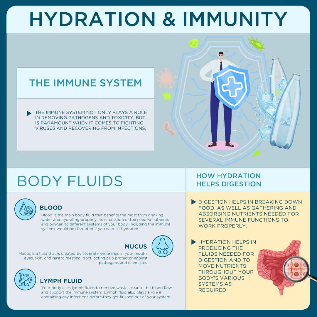 Importance Of Hydration For Immunity & Immune System Infographic