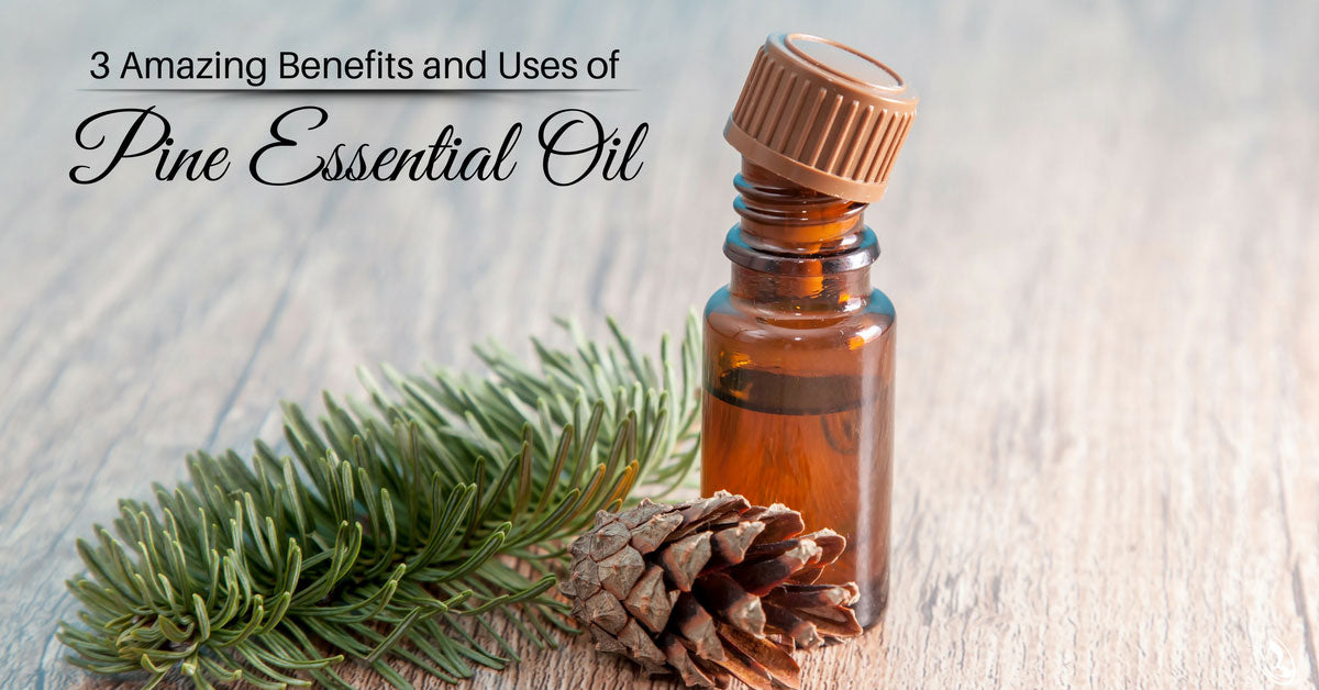 3 Amazing Benefits and Uses of Pine Essential Oil