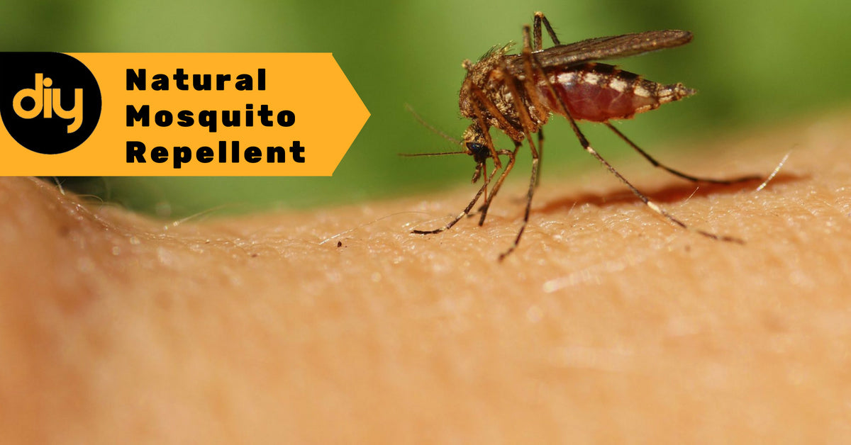DIY Natural Mosquito Repellent Using Essential Oils