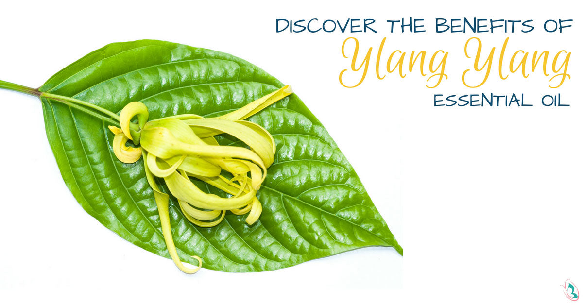Discover the Benefits of Ylang Ylang Essential Oil