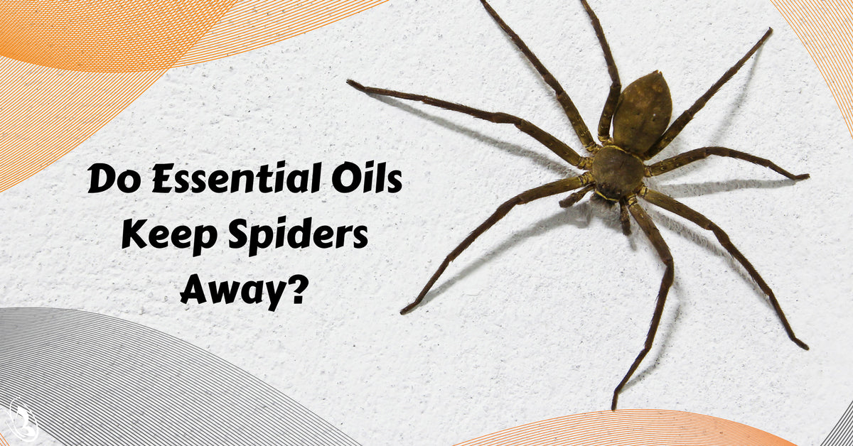 Do Essential Oils Keep Spiders Away?
